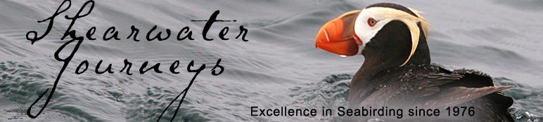 Shearwater Journeys,  P.O. Box 190, Hollister, CA 95024 USA Phone: 831-637-8527